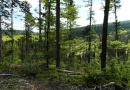 Poledník, jezera Prášilské a Laka 03